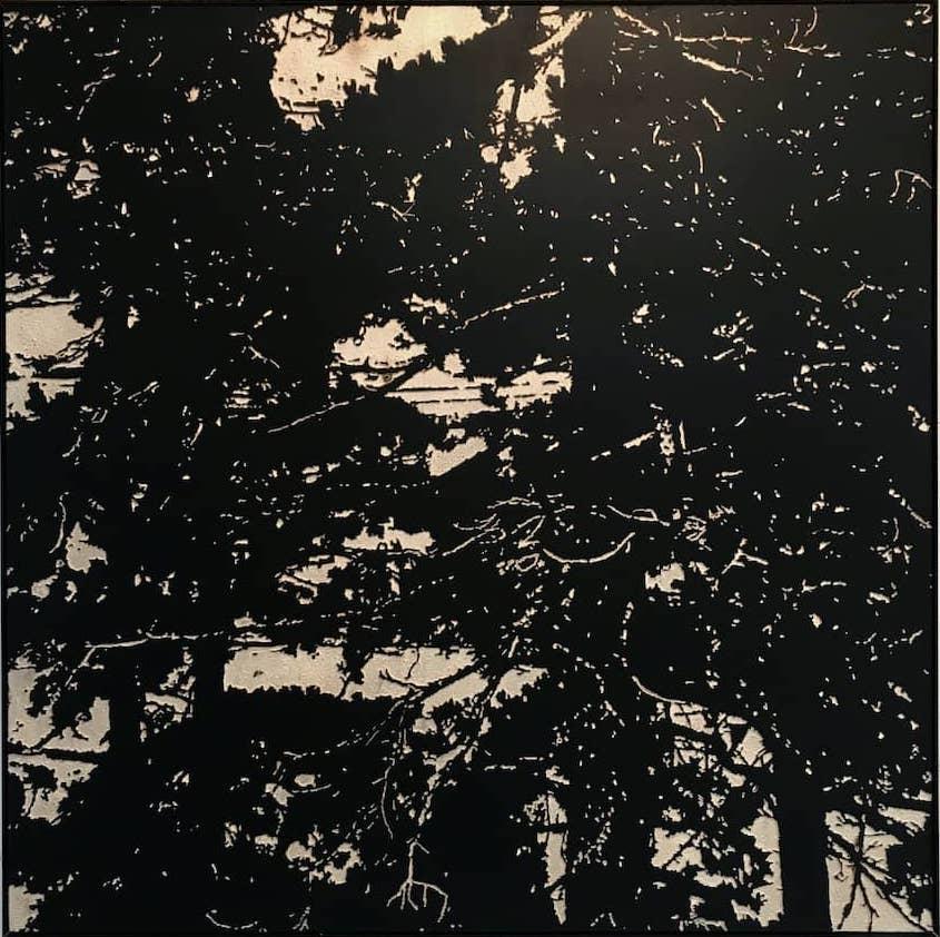 albLICHT - Tanja Niederfeld